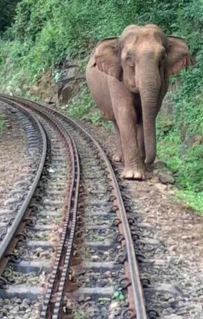CKxNMmUUMAAUI4P?format=jpg&name=small - The Nilgiri mountain elephants