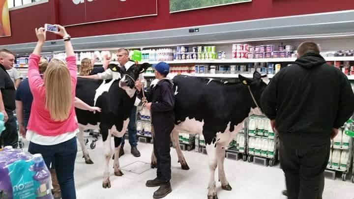 фермеры пригнали коров в супермаркет