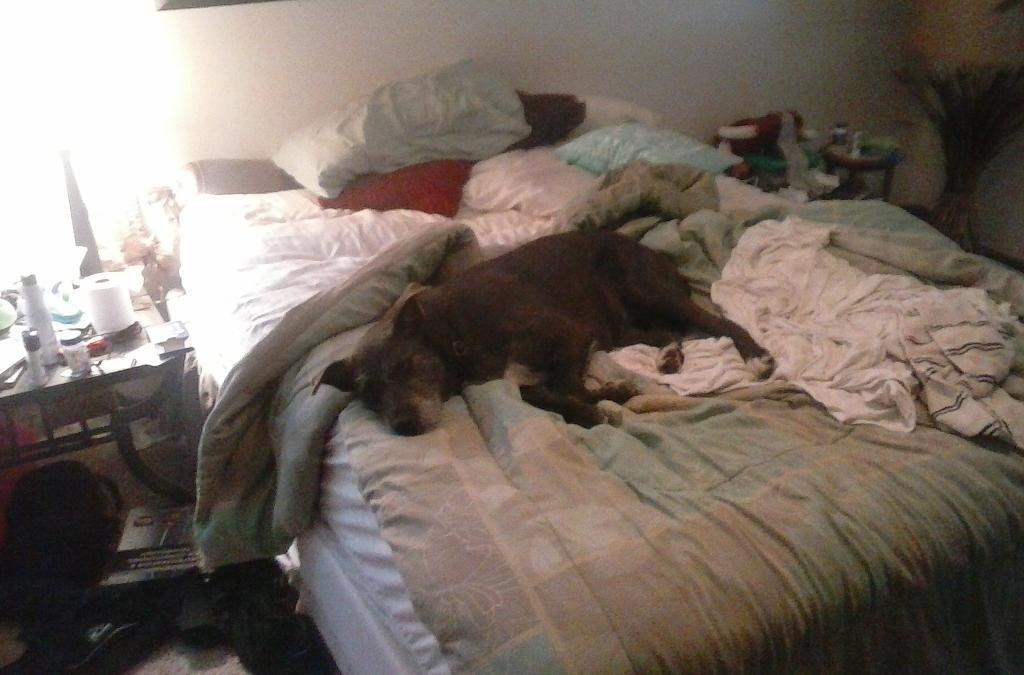 I love lazy Sundays http://t.co/WCMHfdGdFx
