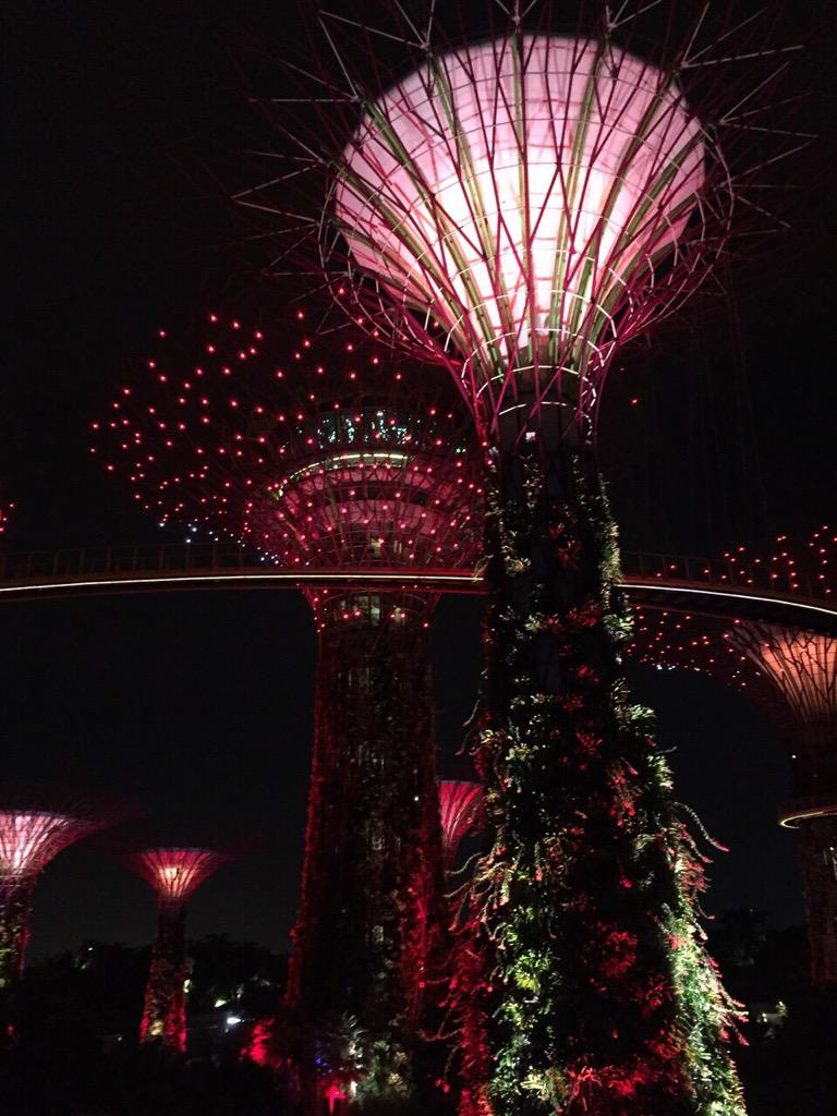 Nite view of the supertrees! Counting down to SG50 National Day  @mediacorp #SG50 #Singapore #tca #thecelebrityagency http://t.co/OkmdYnuOCs