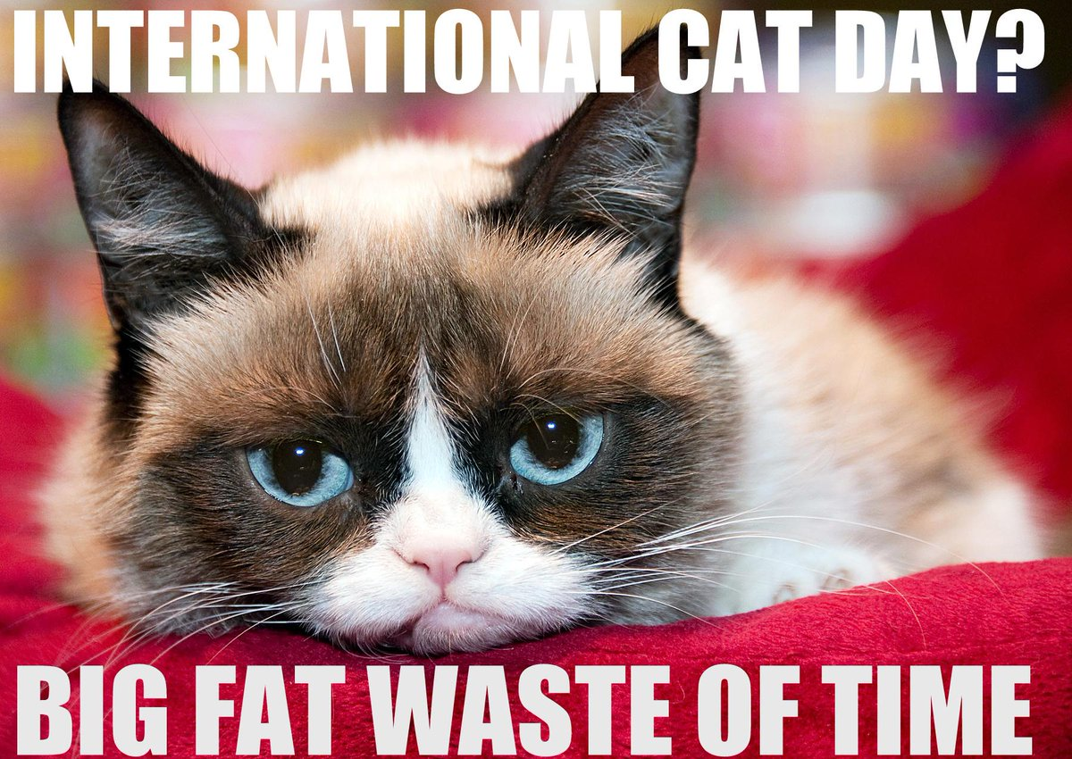 @RealGrumpyCat #InternationalCatDay http://t.co/AUk3bLHSQq