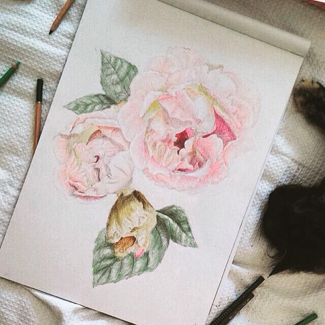 My little drawing companion  #drawing #coloureddrawing #rose #rosedrawing #colourpic.twitter.com/9ToRWHSpg3
