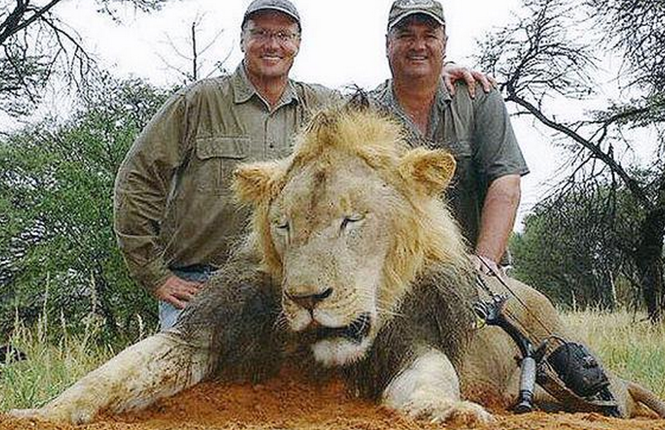 "Turns out this a-hole has a prior - ""@MotherJones: Dentist admits to killing Cecil the Lion.. http://t.co/1pM6NuIKPT http://t.co/eCH1ZSddcB"""