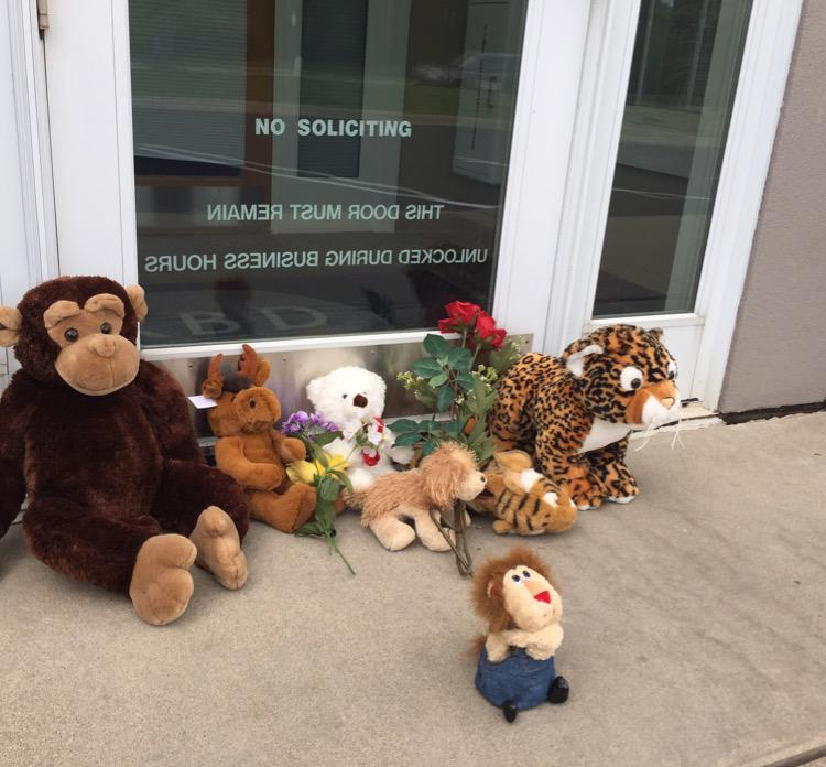 A memorial for Cecil the Lion killed in Africa by a MN dentist is growing at the now closed office in Bloomington. http://t.co/K9UaQxGhsr