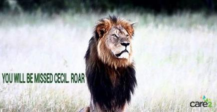Sign the petition to demand justice for #CeciltheLion! http://t.co/CPIYnaCz4D http://t.co/dI2U9ETGM2