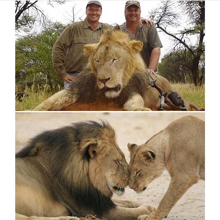 Rest in peace #Cecil #CecilTheLion When this cruelty will stop. Shane #WalterPalmer http://t.co/2H32noSSdN