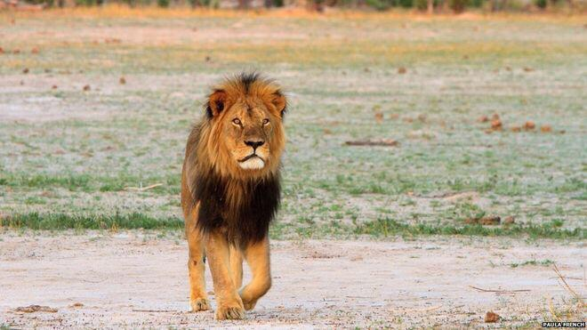 So tragic. One of mother earth's truly beautiful creatures. #RIPCecil #CecilTheLion http://t.co/mjys3qvatb