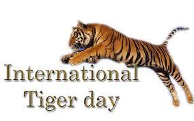 pus que 400 tigres de Sumatra ! CLDRBBUUAAA8zT5