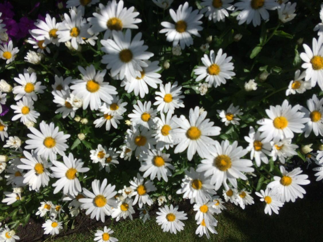 Don't you just love daisies? http://t.co/KiNrVysfSo