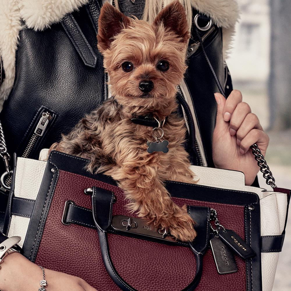 Miss Asia is joined by another famous furry friend for @Coach's adorable #coachpups campaign: http://t.co/SVkglrX0jQ