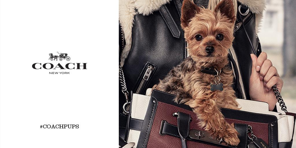 Meet the third #coachpups star, @MirandaKerr's pup Frankie. (Photo: #StevenMeisel)