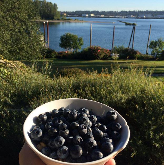 Insights Manager @jeffgrillo enjoyed some delicious #blueberries this morning in his hometown of Portland, Oregon. http://t.co/uYNuldSoeX