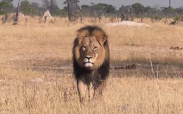 """RT @Telegraph: """"Hunting is a coward's pastime,"""" writes Sir Roger Moore http://t.co/xTnidRdwAy #CecilTheLion http://t.co/e3IMT37OUq"""
