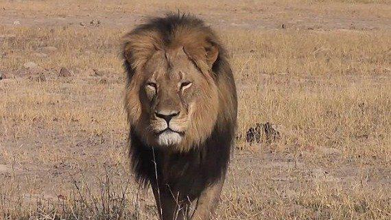 Thousands want justice for #CecilTheLion https://t.co/mst9l4m8tj   @USFWS http://t.co/TMrD2Q0NNh