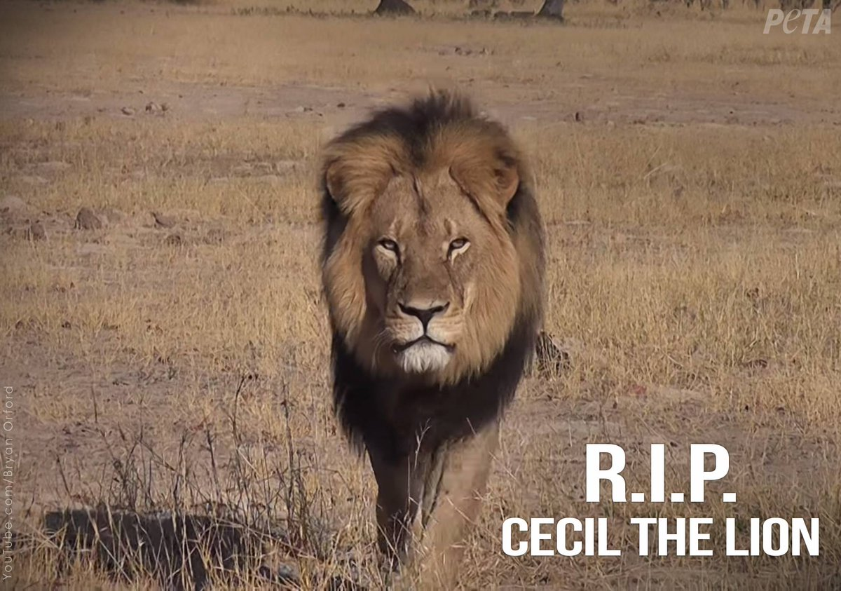 "I want to start a kickstarter to ""Teach Walter Palmer a lesson"". Who's in? http://t.co/5iPQZhhGrb"