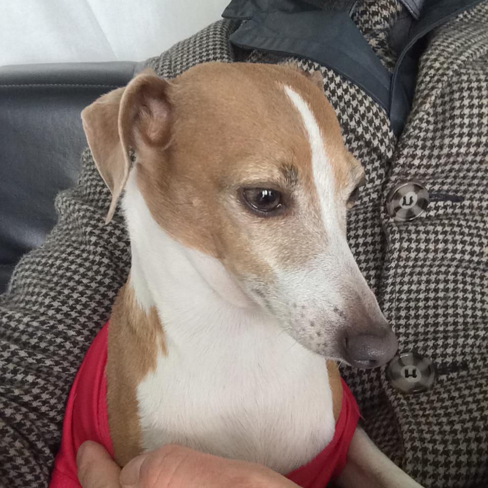 Dog update. Dateline Fitzroy. We now have a very trembly dog. Warm inside the house. No tags :(  Do you know her? http://t.co/5hbUSuHYiB