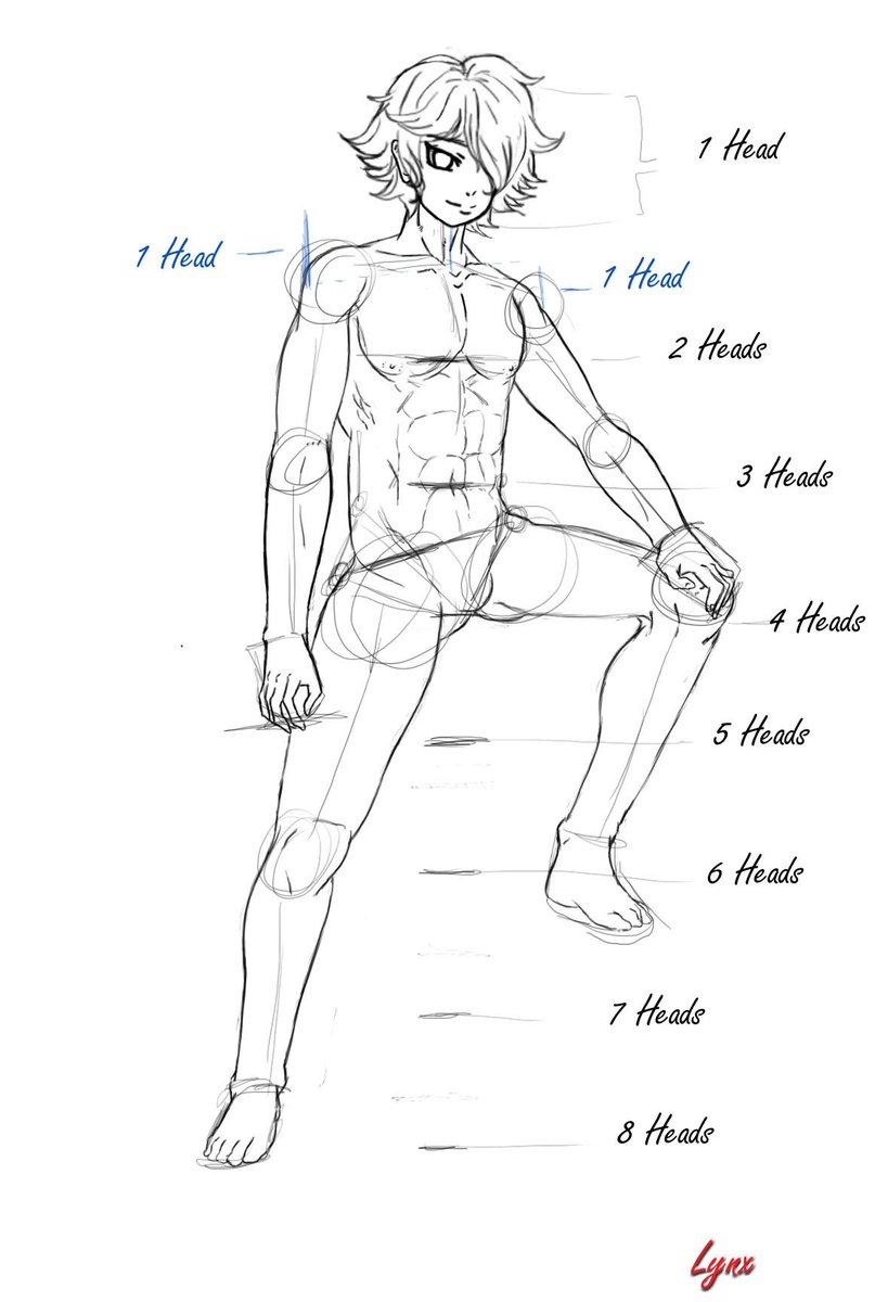 World Manga Academy On Twitter Basic Human Anatomy Guide By Lynx