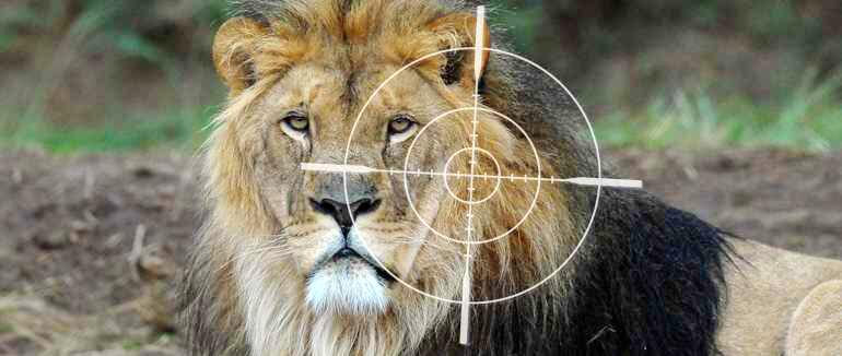 'Stop Canned Hunting!' Pls sign/share thanks: https://t.co/jErLFQxrMb #FOURPAWSgowild #RIPCecil #BanTrophyHunting http://t.co/7CRFPSibeI