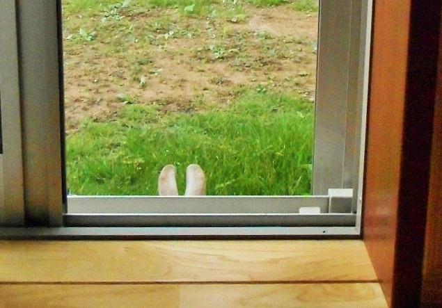 家の中に入りたそうにしていたのでそっ……と戸を閉めたら地味に怒っておられた。 pic.twitter.com/UvVru55gdk