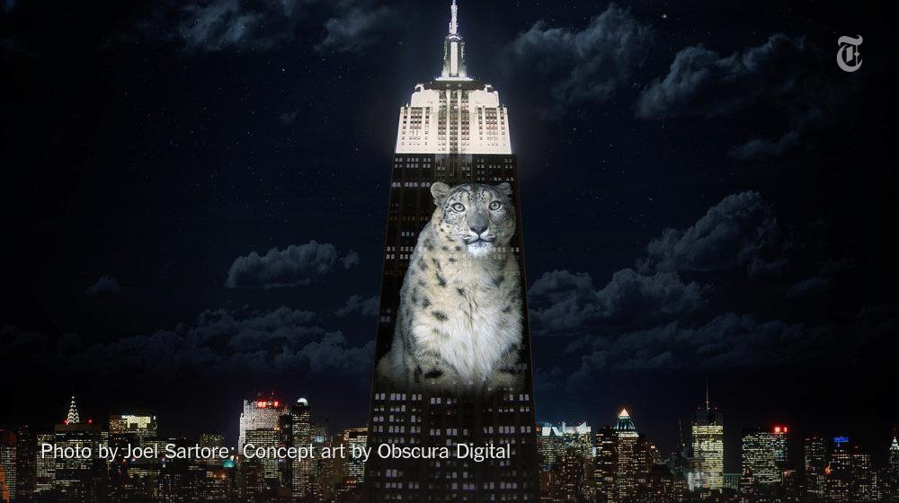 RT @nytimes: Images of endangered species will be projected on the Empire State Building on Saturday http://t.co/vL0Z0INZQj http://t.co/VWX…