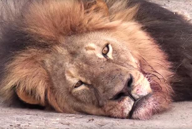 #CecilTheLion brought much-needed focus to the horrible realities of poaching http://t.co/Q2EGCfvH5T @washingtonpost http://t.co/dM7ot15tEx