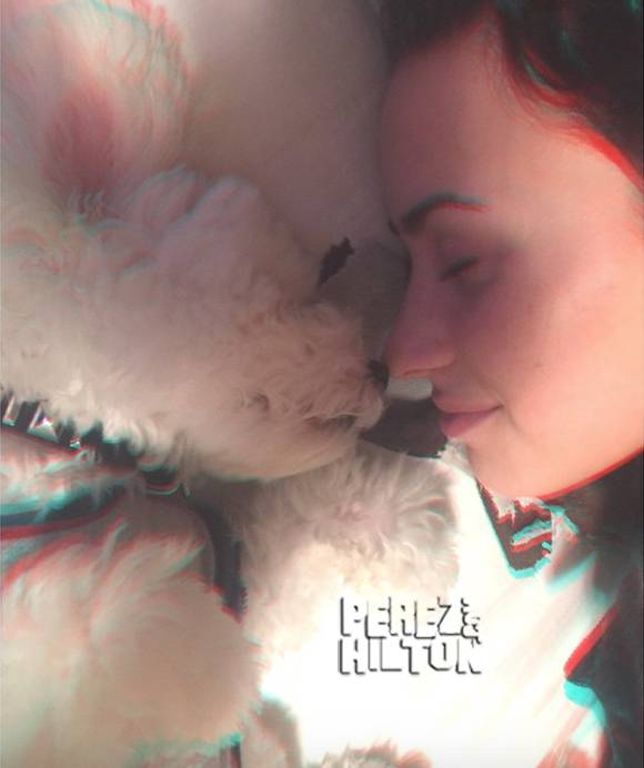SO SWEET! @ddlovato pays tribute to her puppy #Buddy! http://t.co/wxHai3sK5m http://t.co/qZFhc8N28k