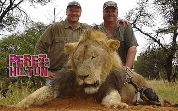 Hunter who helped dentist #WalterPalmer kill #CecilTheLion speaks out! http://t.co/90DJVqP1pz http://t.co/QZ8IoDTJvs