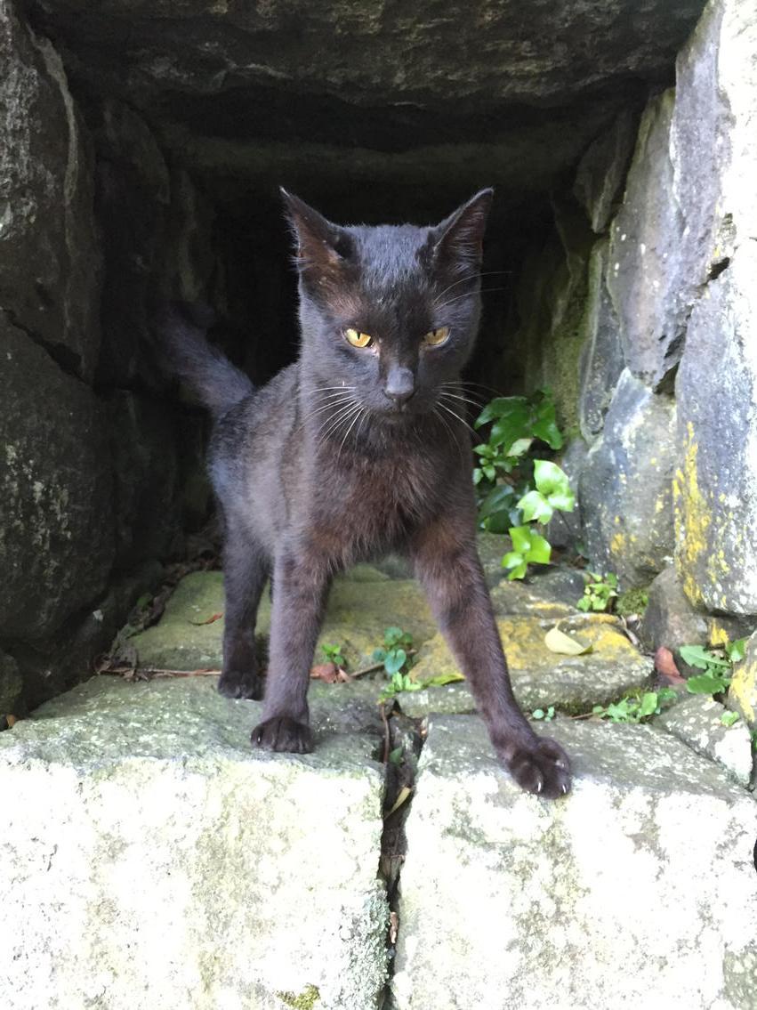 カッコイイ黒猫がおる pic.twitter.com/3SbD97xfxx