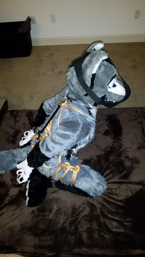Report Me Please! on Twitter: A foxy all tied up ;) (Not