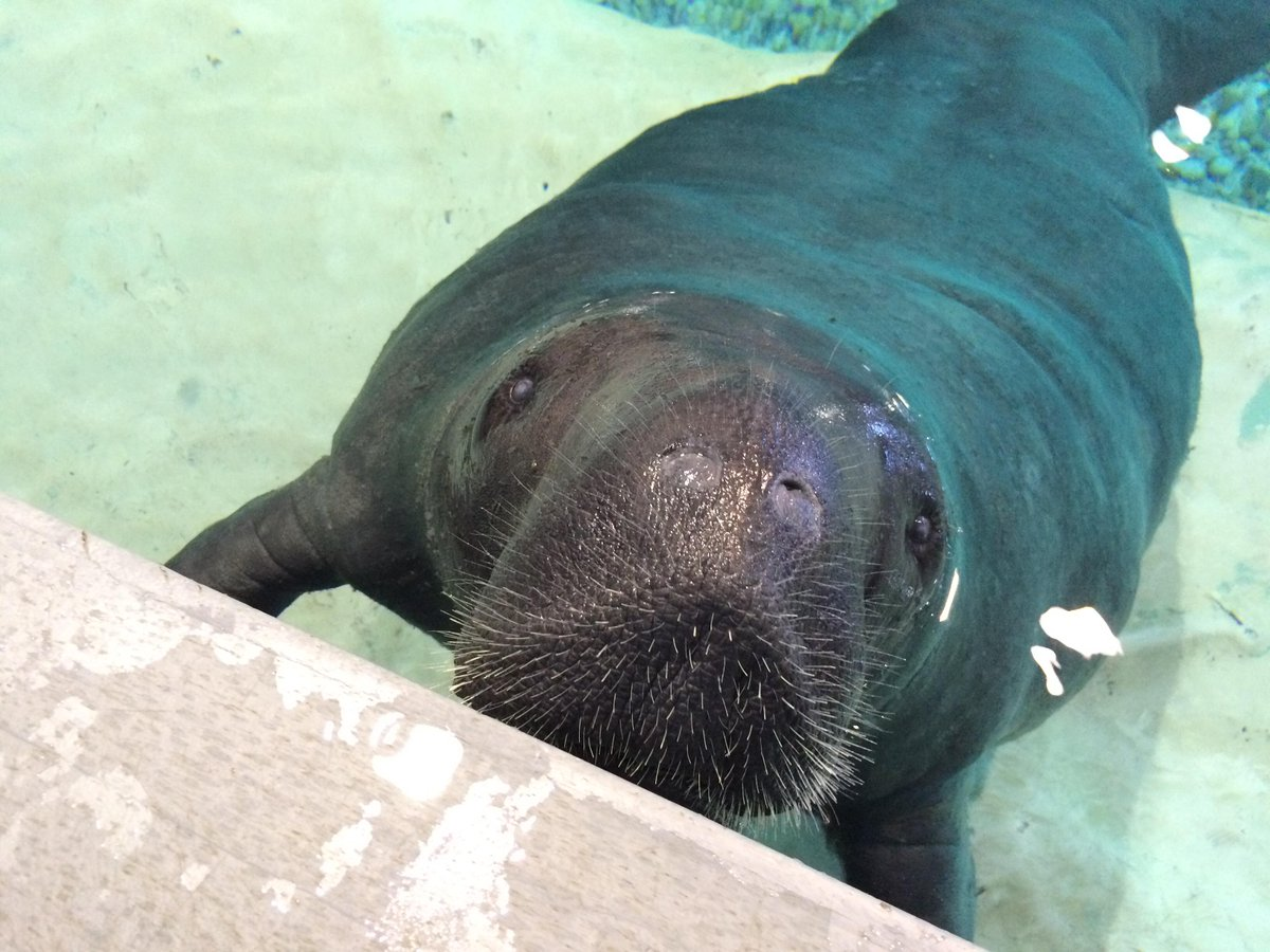 Snooty says Happy Saturday everyone! (:3) http://t.co/tOhz19TleD