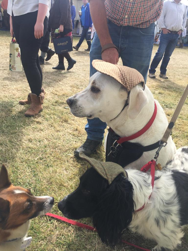 The latest in must have doggy headgear as modelled at @TheGameFair  #CLAGF http://t.co/FpKZZrEjSE