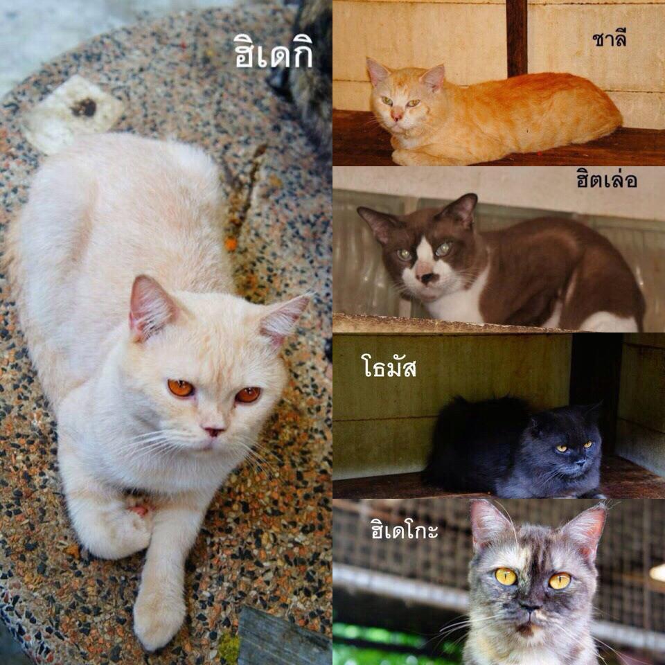 ใครสนใจอยากเลี้ยงแมวไหมคะ ลุงเพื่อนต้องผ่าตัดสมอง อยากได้คนรักแมวช่วยรับไปค่ะ http://t.co/RICCty7v4l