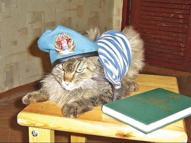 Открытка кот десантник