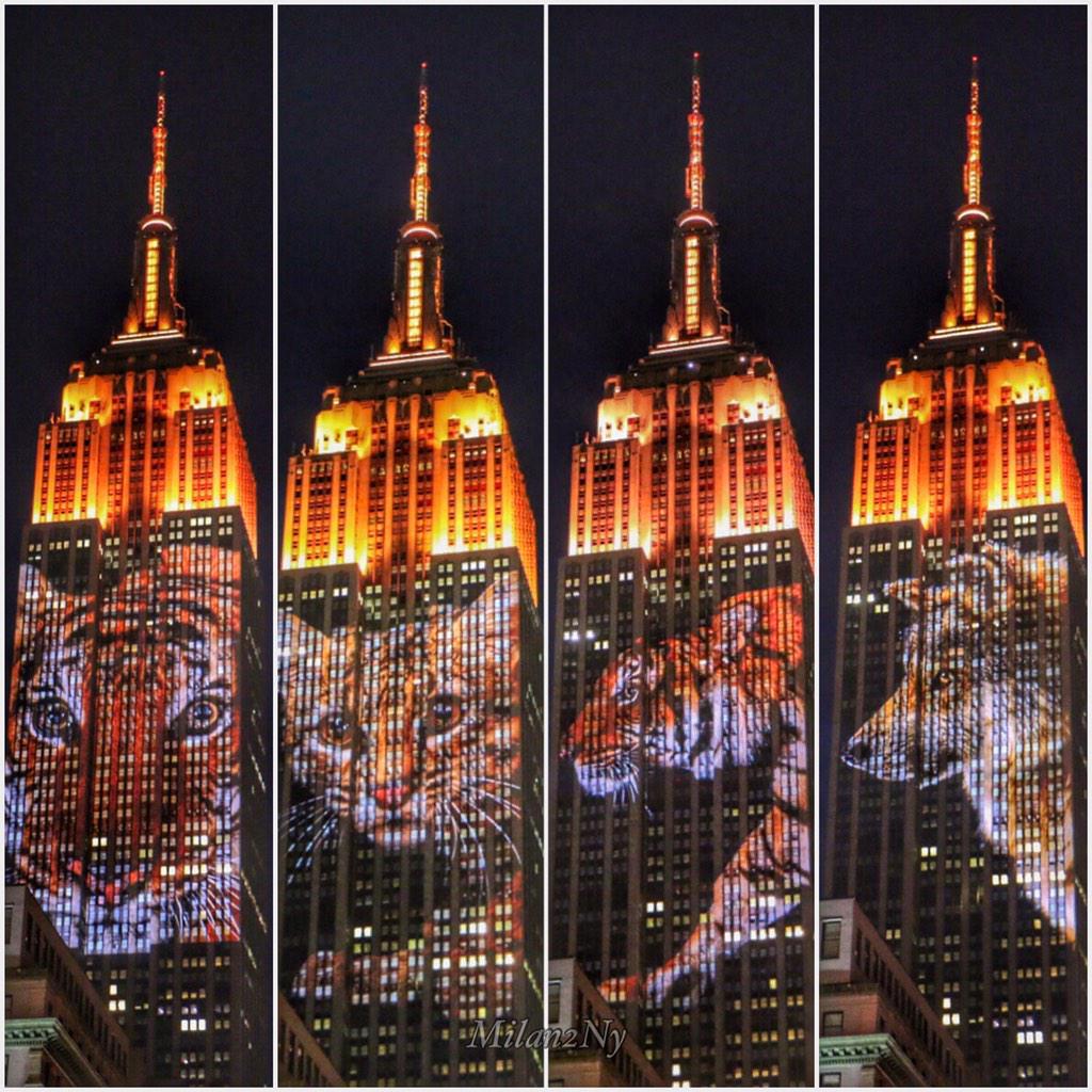 Thumbnail for Endangered Species @EmpireStateBldg  #NYC