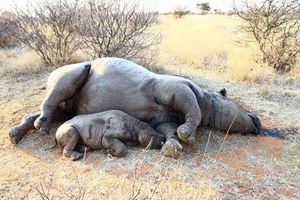 Poaching by poison... Just take out the whole family so you can have the horn!  Does anyone care? Can the world help? http://t.co/ocnKSDCViR