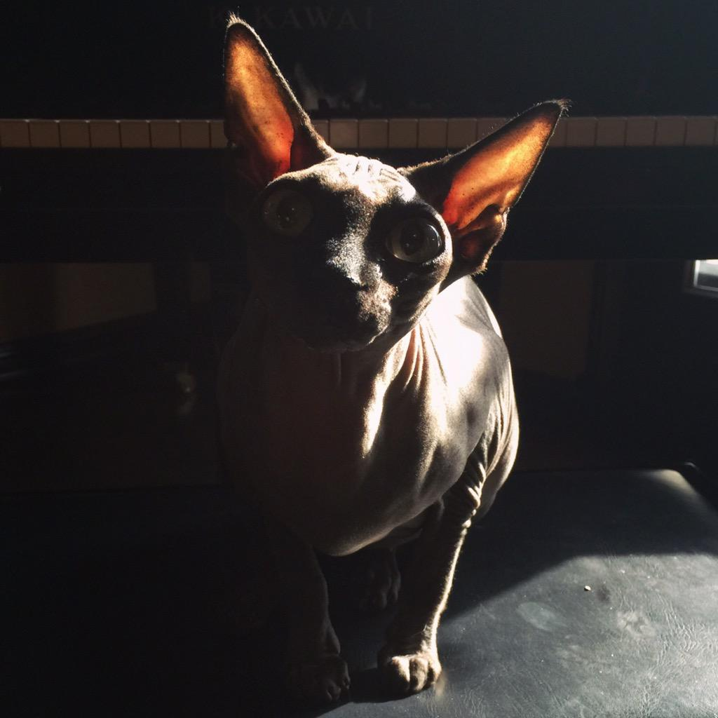 Piaf keeping my seat at the piano warm. ❤️ http://t.co/rl4B2mw6Km