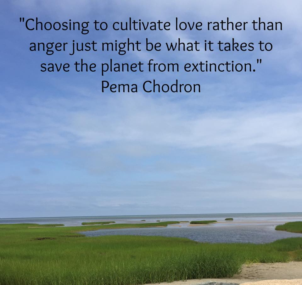 "Pema Chodron Quotes Matthieu Ricard En On Twitter ""wonderful Quotepema Chodron"