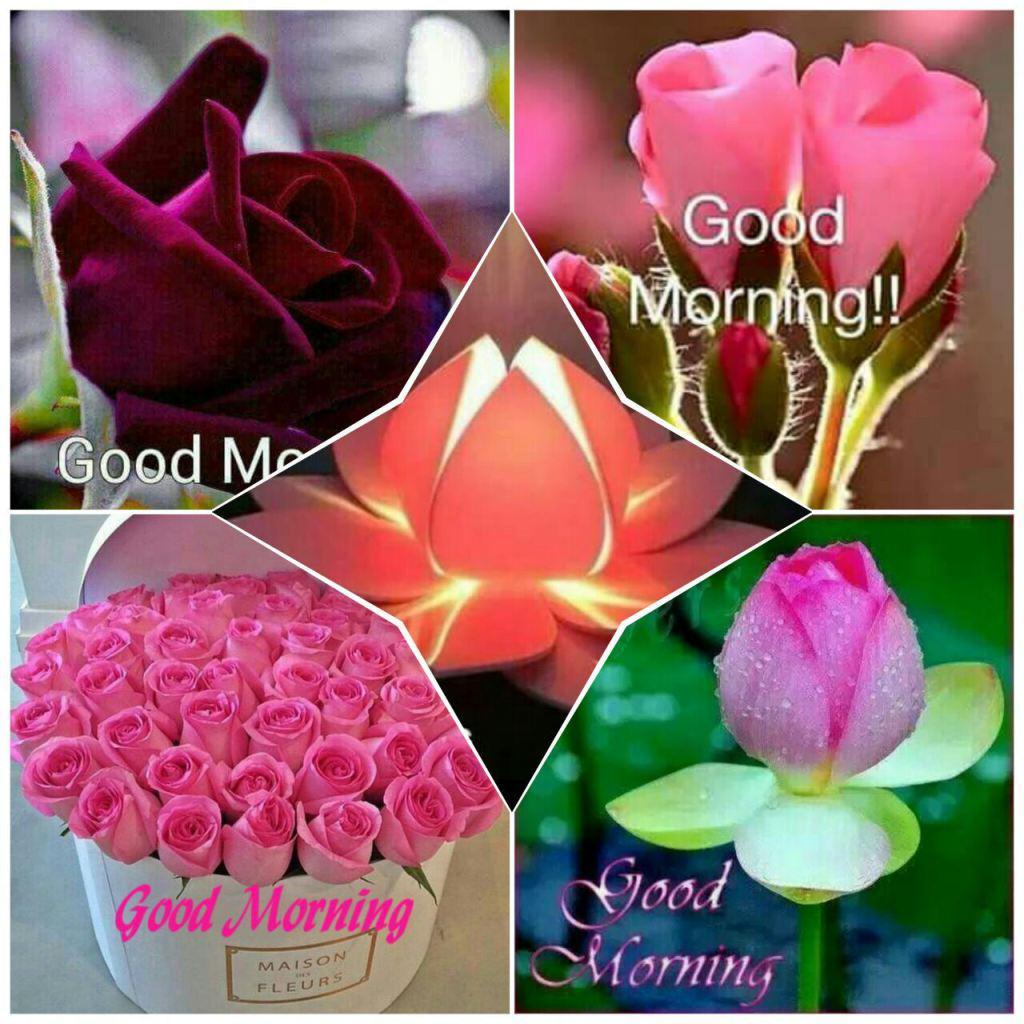 """Whatsapp Good Morning Love Images: SUN CPM On Twitter: """"WhatsApp Flower's Good Morning Http"""