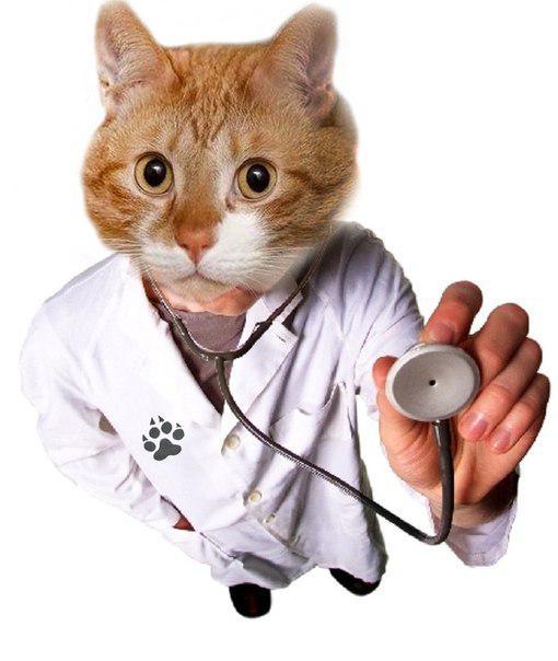 Коты картинки медики