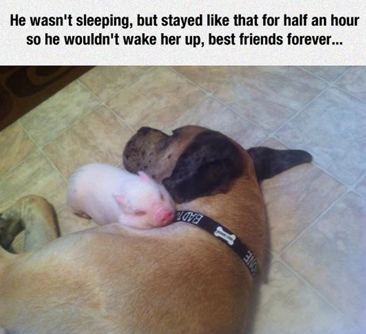 True friendship... http://t.co/5MXLCF4tRg