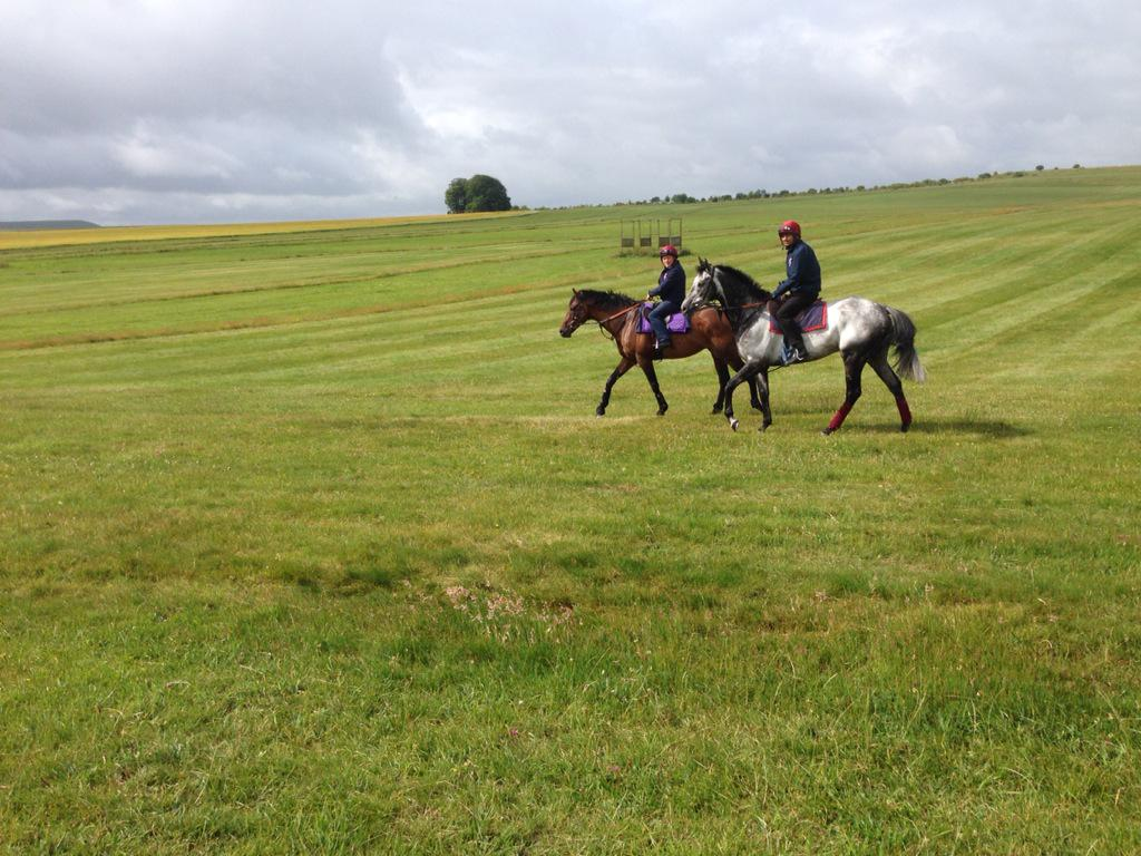Al Kazeem to be retired. He was a joy to train. (Pictured last week with his lead horse) http://t.co/HWYmtPeK9P http://t.co/1uPnjYb8v1