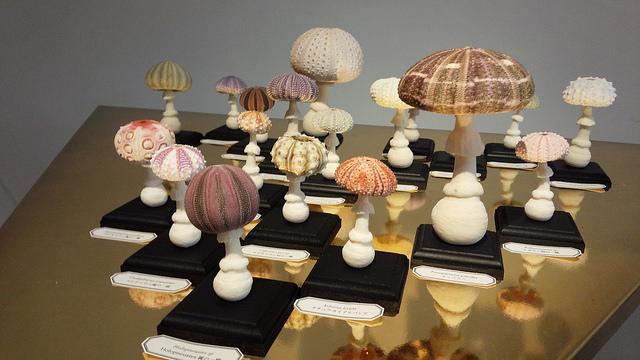 【渋谷】 自然の造形美展2「ウニのない人生なんて」に行ってきた | IDEA*IDEA http://t.co/EPl9KjKaen via @taguchi http://t.co/d9YVrQSCOe