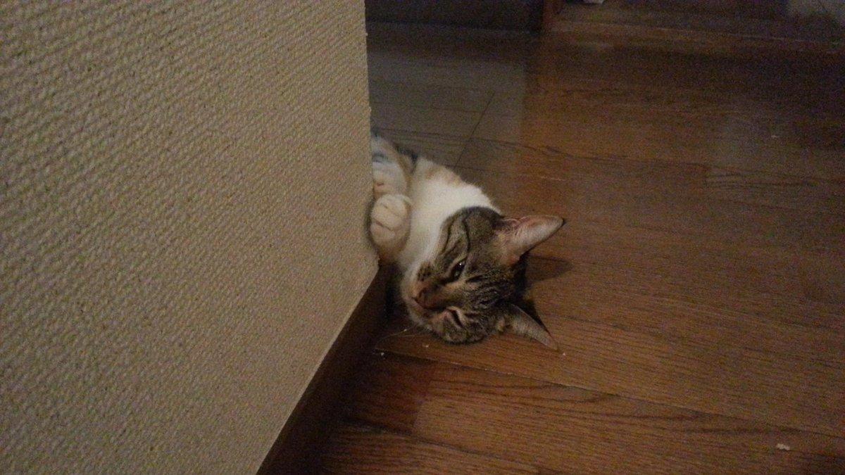 最近廊下の角に猫が落ちてることが多い http://t.co/WUawGc6RdD