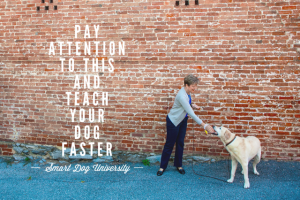 [New] Pay Attention to THIS to Teach Your Dog Faster & Easier http://t.co/tUYJJYQRjl http://t.co/zpuoc1daQs