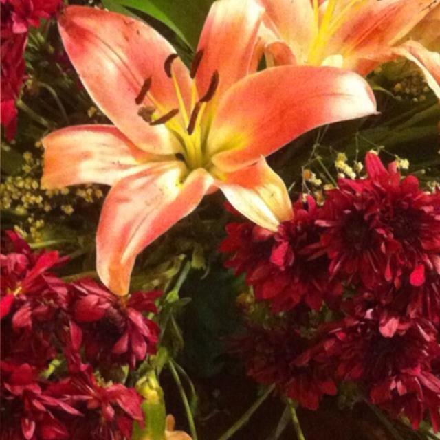 الورود الحمراء CLqPRT1WgAAObee