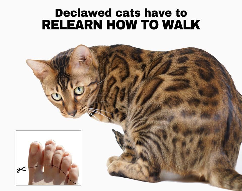 Cat not walking right