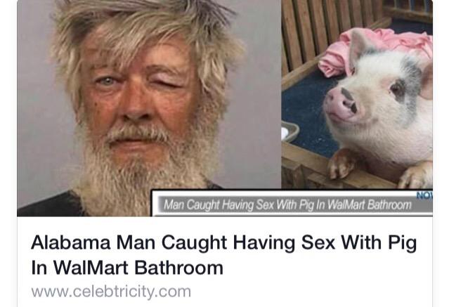 Men having sex with pigs