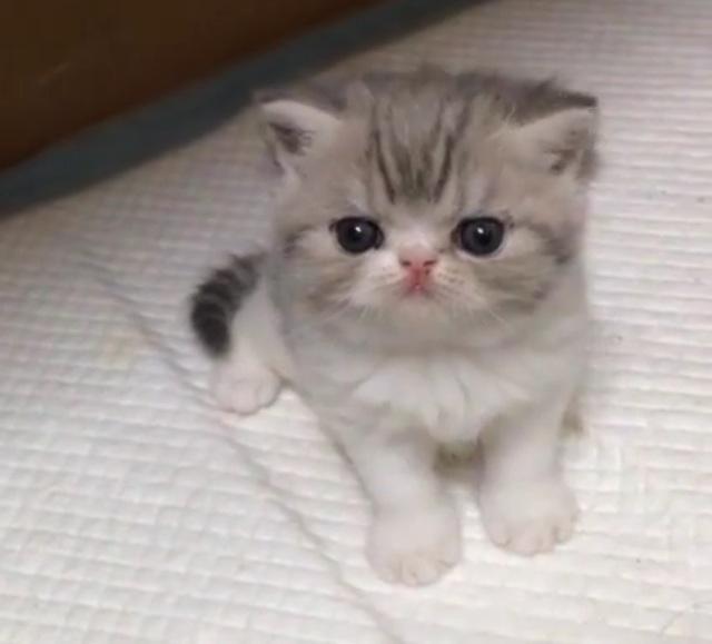 if you're feeling down, here's a kitten http://t.co/S2rwoGu9E0