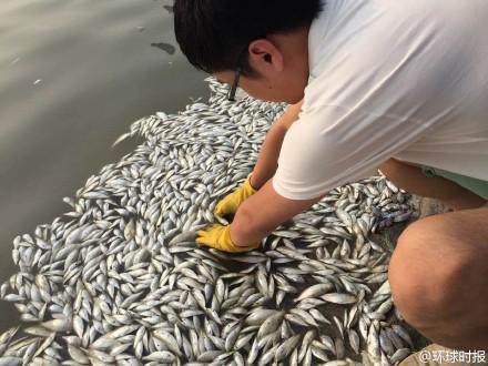Aparecen miles de peces muertos en un río cercano a la planta explosionada en China CM2nBYMUEAAt3Bh