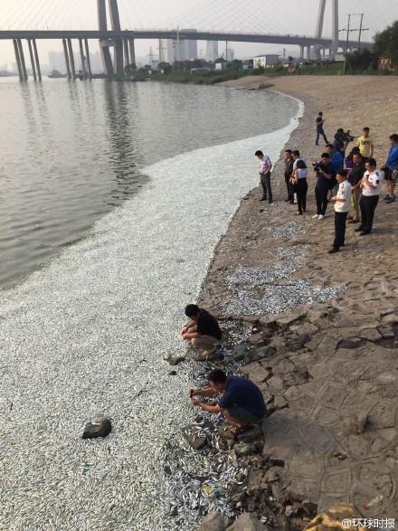 Aparecen miles de peces muertos en un río cercano a la planta explosionada en China CM2nBrgVEAAC_Ct